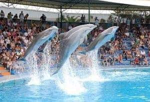 Zoomarine dolphins jumping
