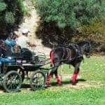 Group in a Horse cart tour